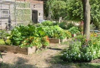How To Grow A Garden On A Budget